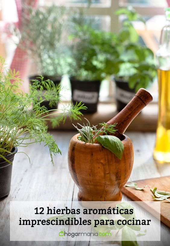 Hierbas aromáticas y especias para cocinar.