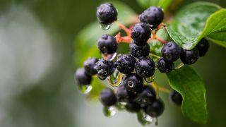 3 frutos exóticos para cultivar en el patio