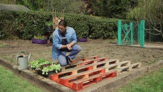 Plantar lechugas en estructura de palet