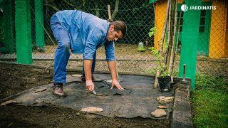 Cómo cultivar frambuesas