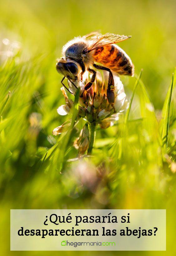 ¿Qué pasaría si desaparecieran las abejas?