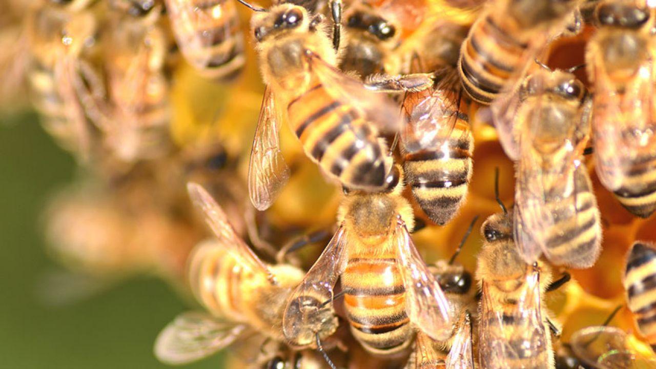 Eliminación y Control de plagas de abejas