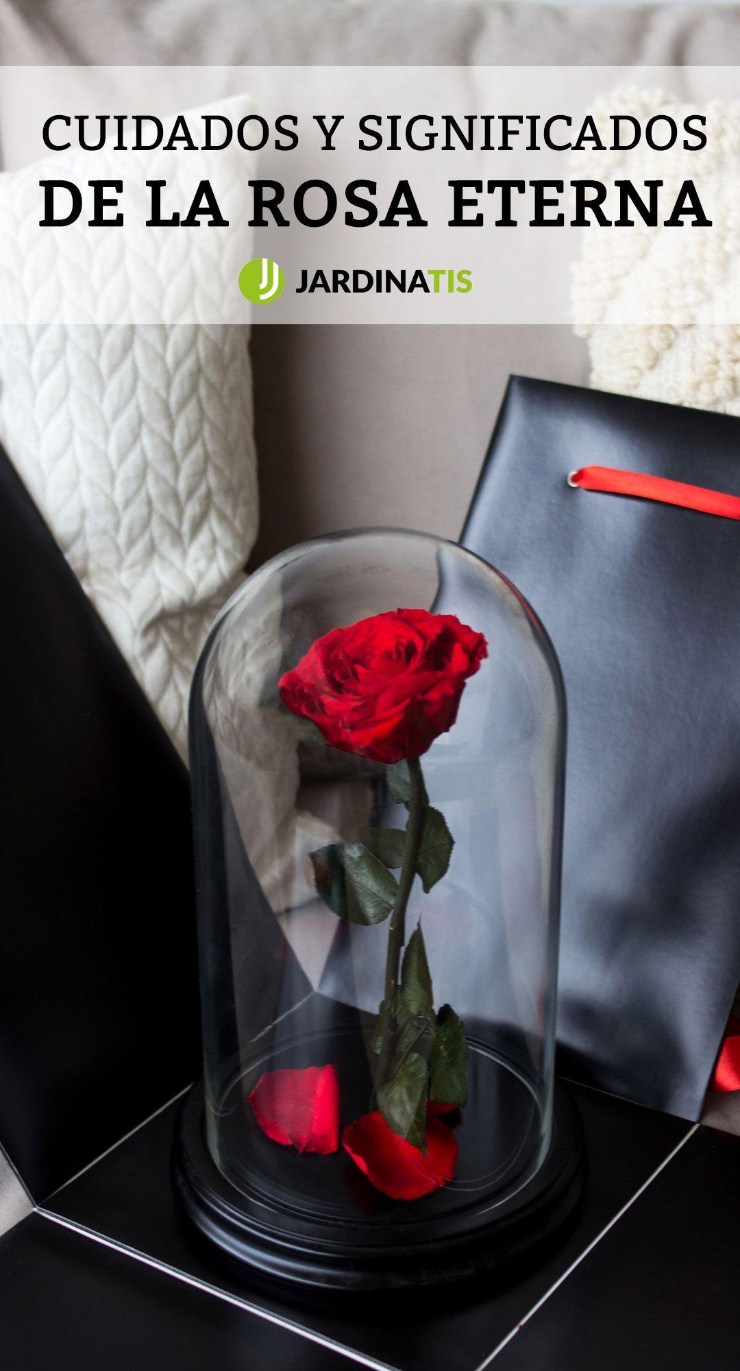 Cuidados Y Significados De La Rosa Eterna O Preservada Hogarmania