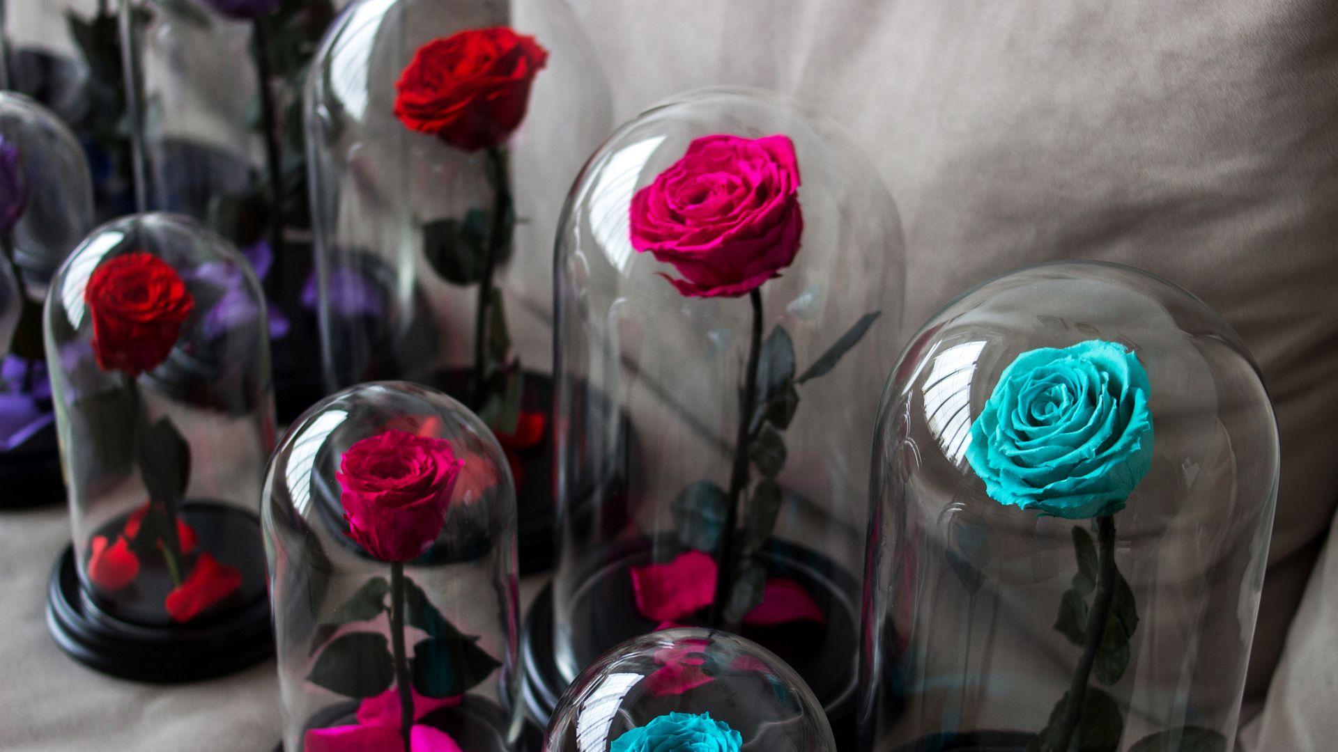 Cuidados y significados de la Rosa eterna o preservada