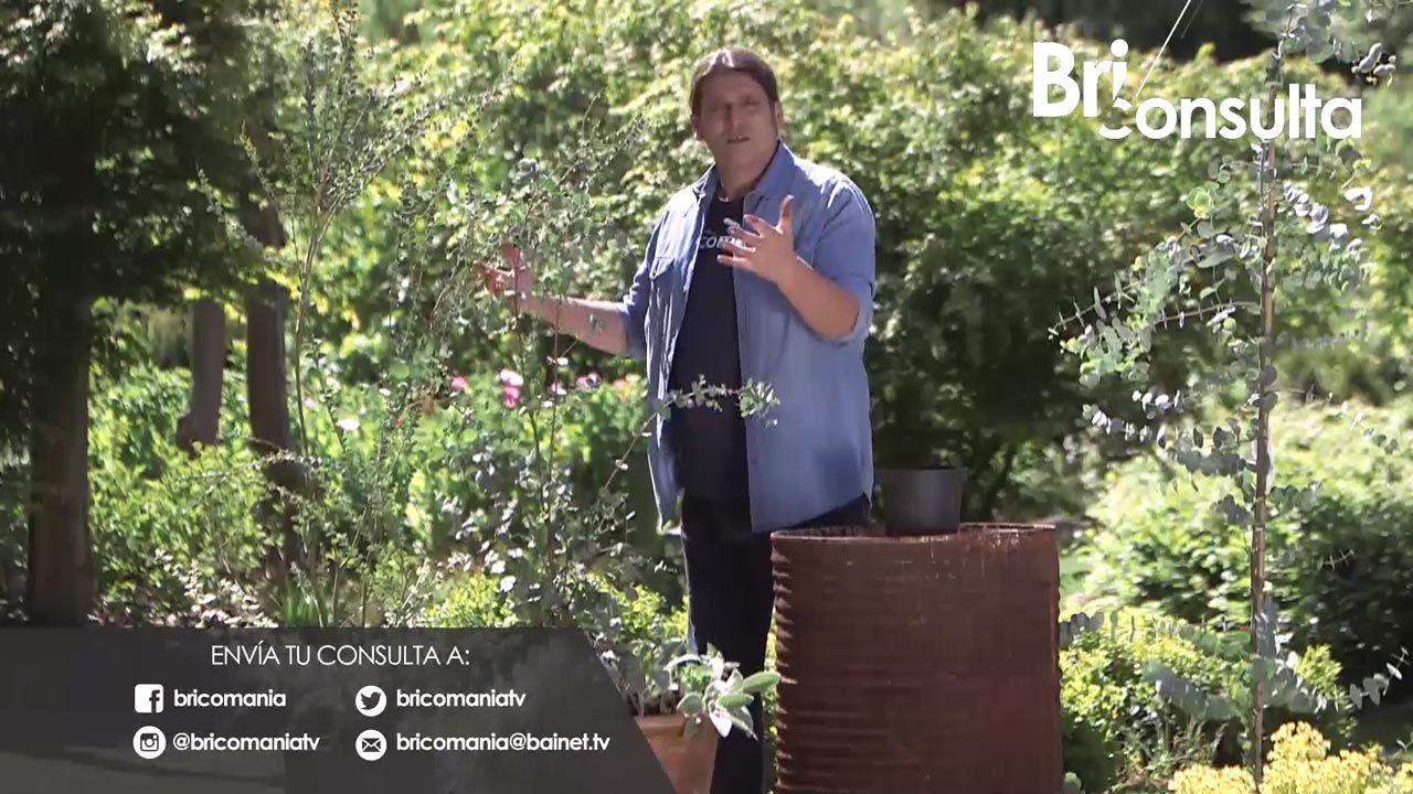 ¿Qué puedo plantar a menos -14ºC?