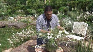 Watsonia, planta de flores blancas