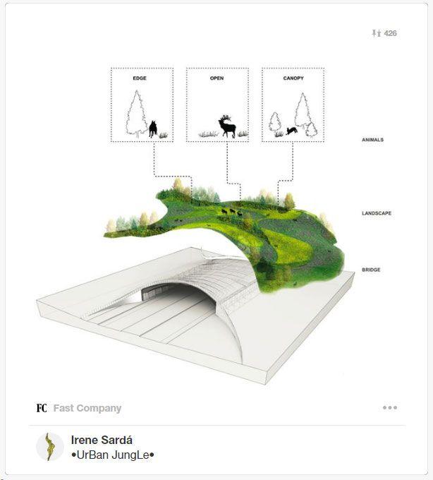 Infografía ecoductos