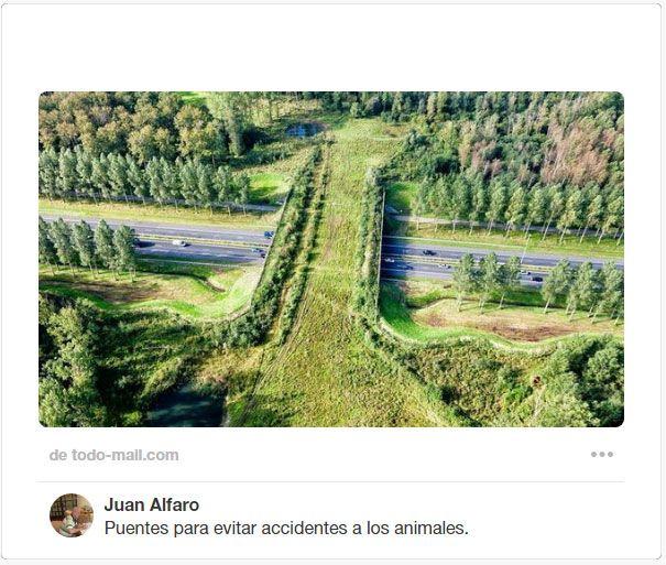 Ecoducto: puente para fauna