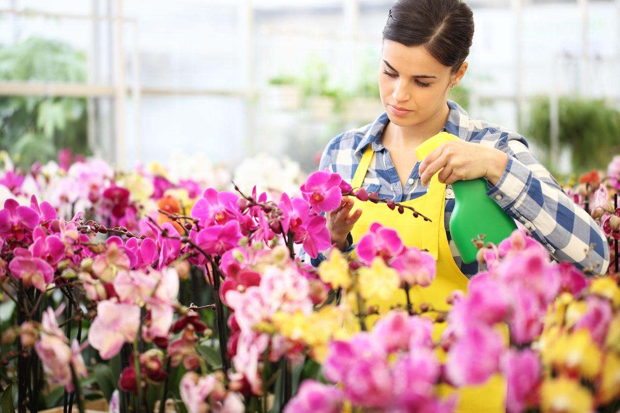Pulverizar las orquídeas