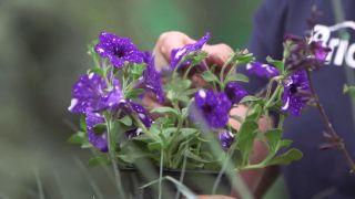 Composición floral en azul metalizado con salvia interespecífica