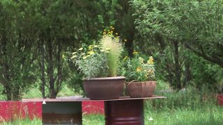 Composición de plantas vivaces en tonos amarillos