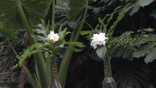 Gardenia, cuidados y composición floral