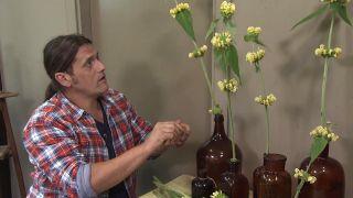 Composición floral con Phlomis russeliana