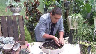 Cesto colgante original de plantas crasas