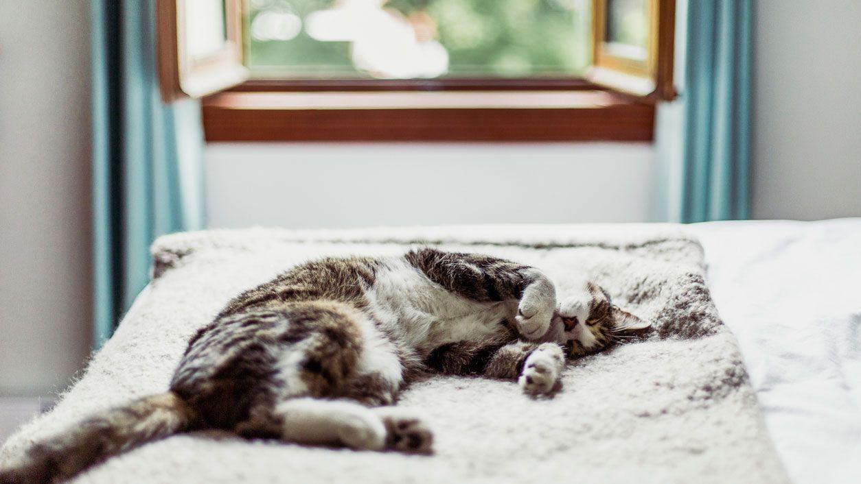 Cuánto duermen los gatos?