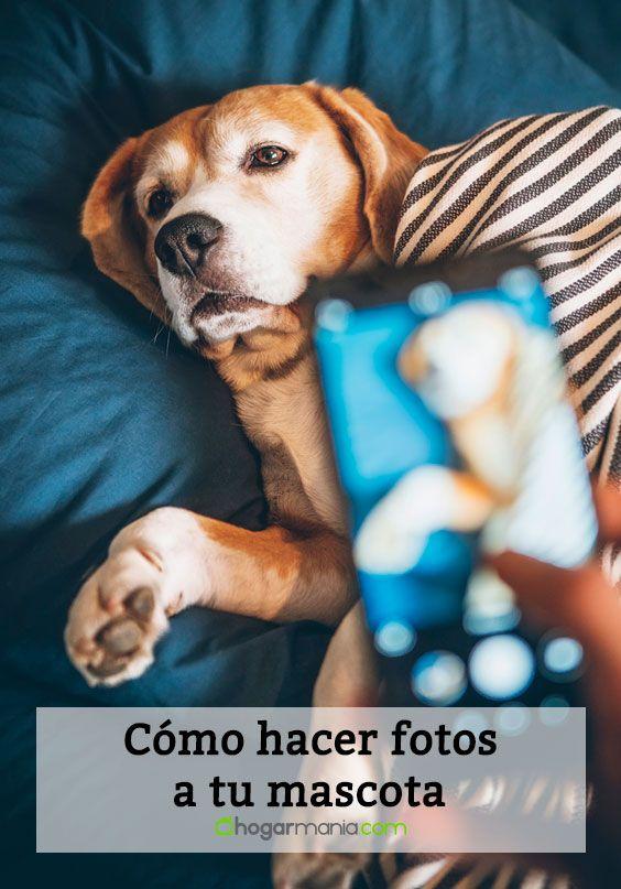 Cómo sacar fotos a tu mascota- foto vertical