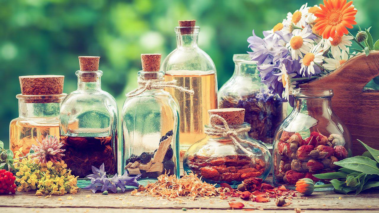 10 plantas medicinales imprescindibles en tu hogar - Hogarmania