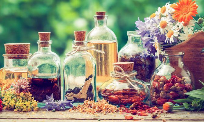 10 Plantas Medicinales Imprescindibles En Tu Hogar Hogarmania