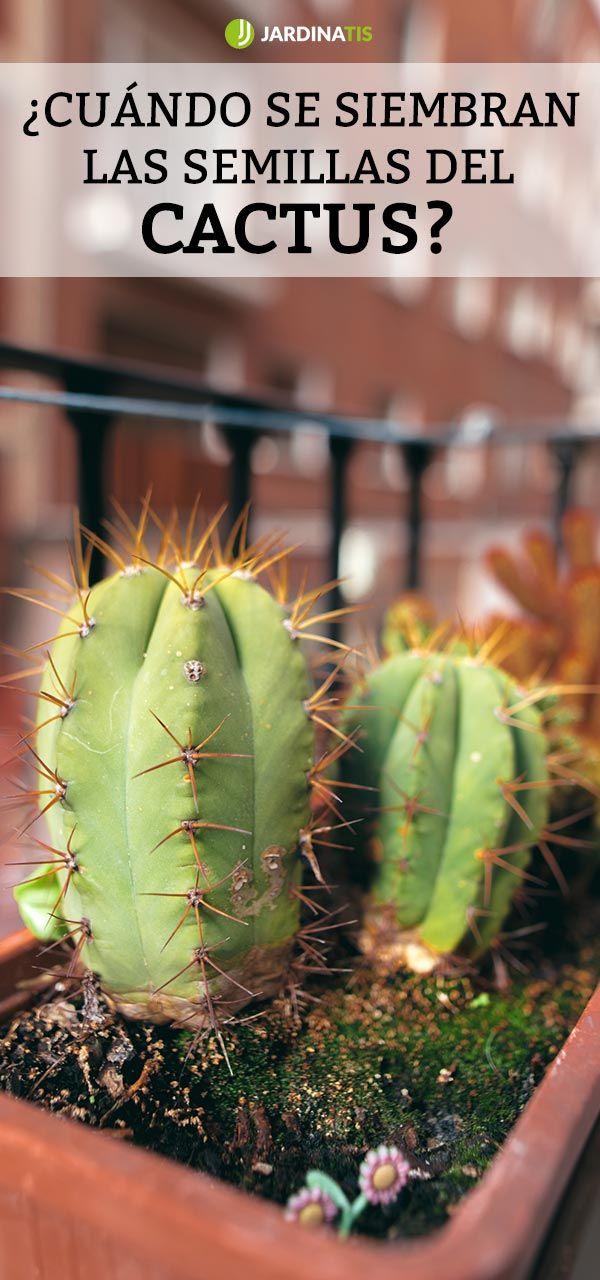 ¿Cuándo se siembran las semillas del cactus?