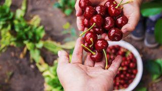 9 frutas con semillas, beneficios y datos para su cultivo