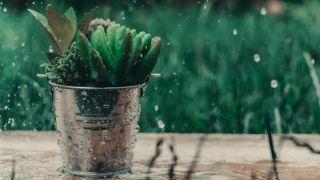 mojar la planta