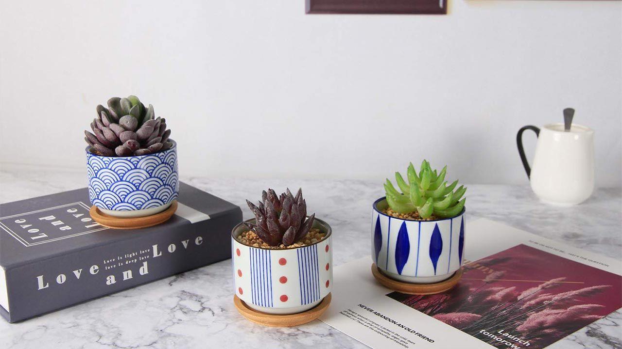 Macetas de cerámica para cactus y plantas crasas