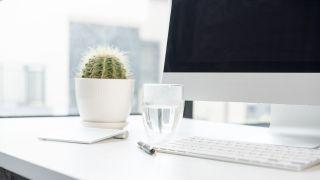 10 plantas perfectas para la oficina