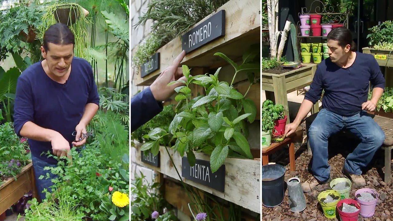 6 sistemas para plantar aromáticas en casa
