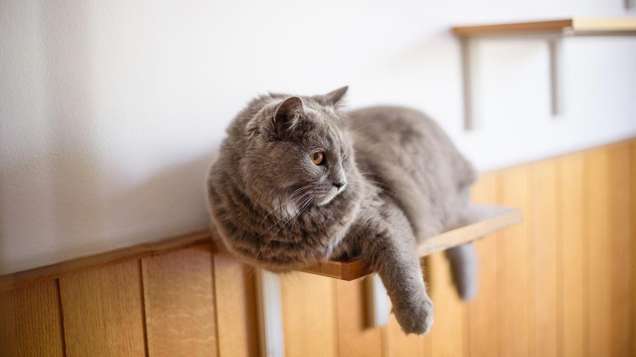 Baldas para gatos