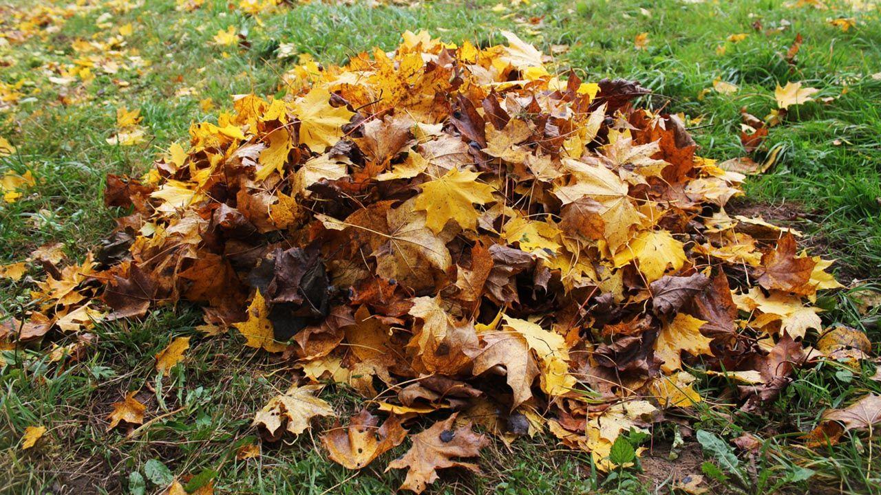 Eliminar las hojas caídas en otoño