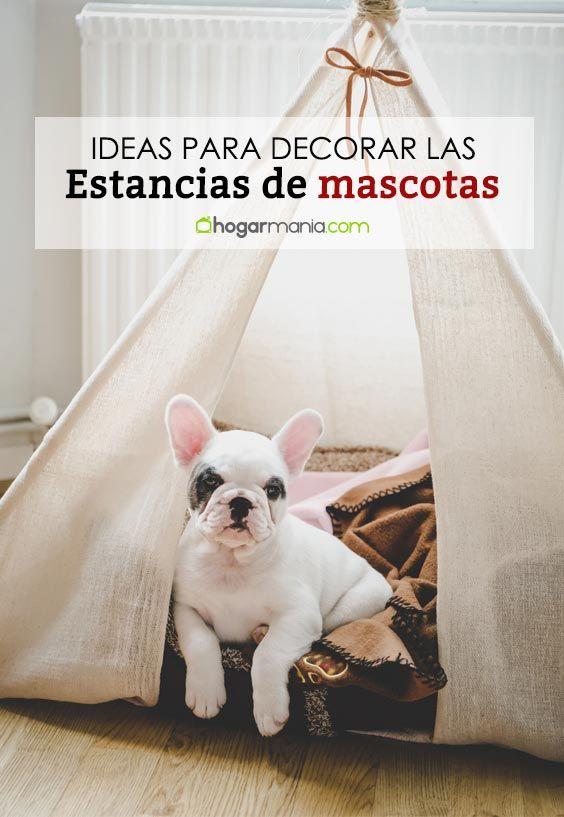 Ideas útiles para decorar las estancias y rincones de nuestras mascotas