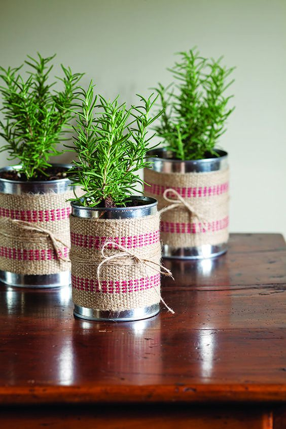 Plantas en latas