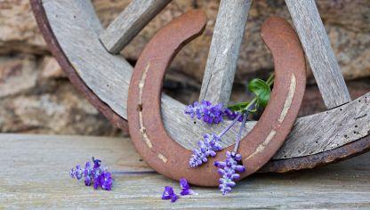 9 Plantas Que Atraen La Buena Suerte