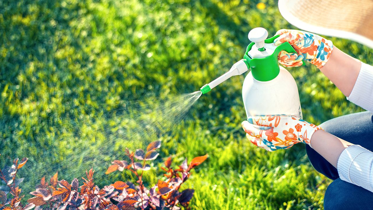 Pulverizar el jardín