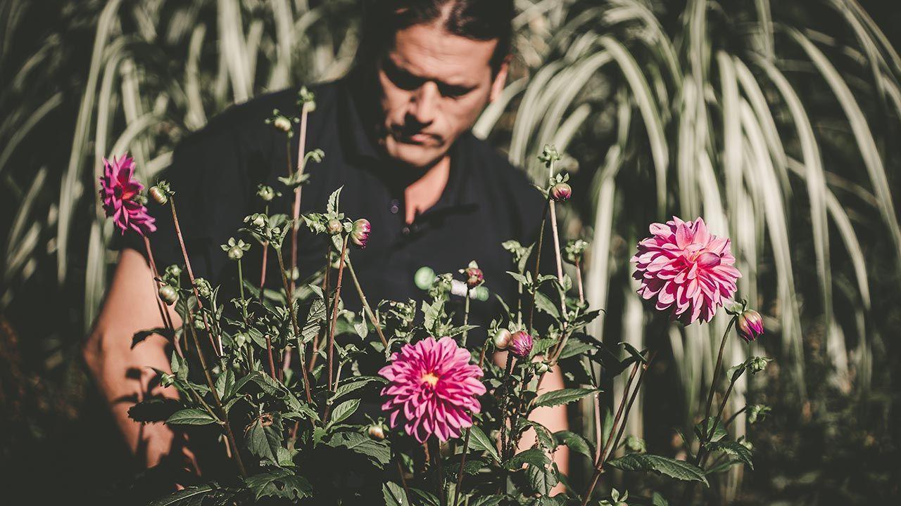 Descabezado floral