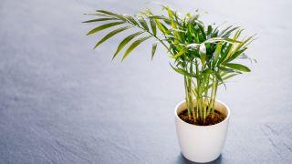 Plantas de interior que resisten con poca luz
