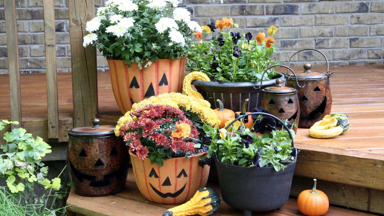 Macetas de Halloween con crisantemos y mini calabcines