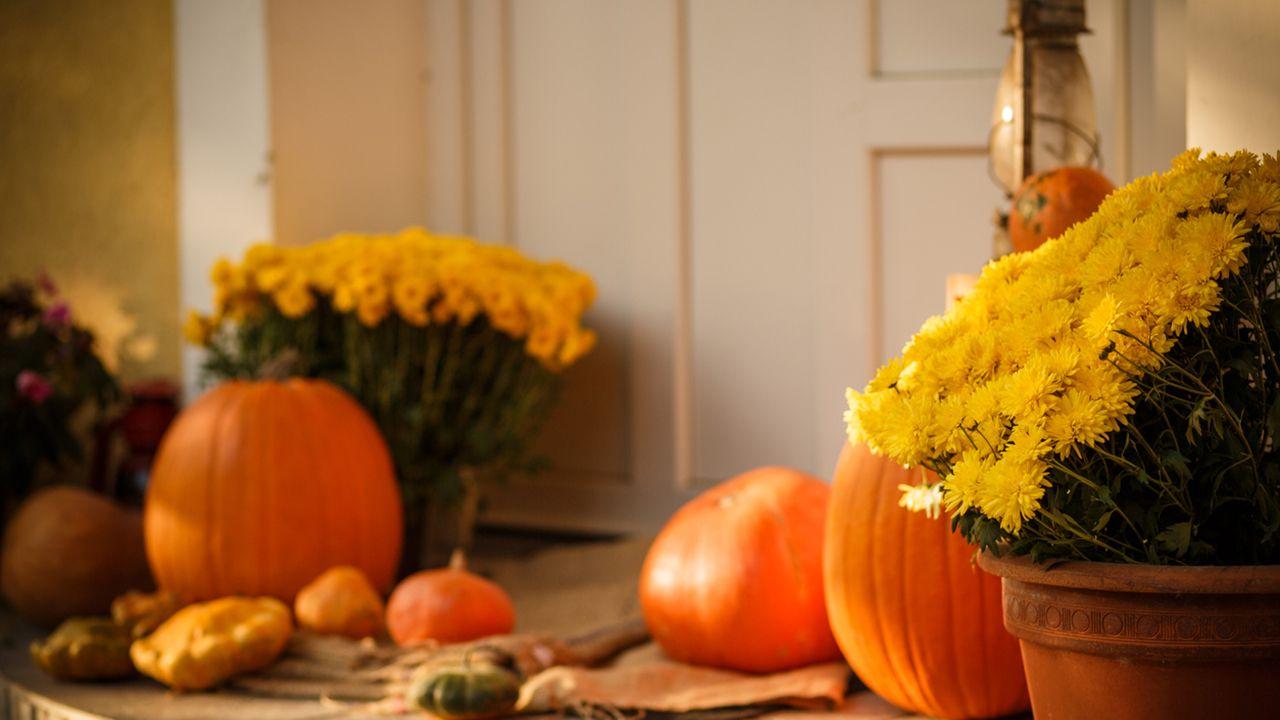Crisantemos y calabazas en el recibidor