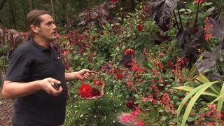 Composición floral de dalias