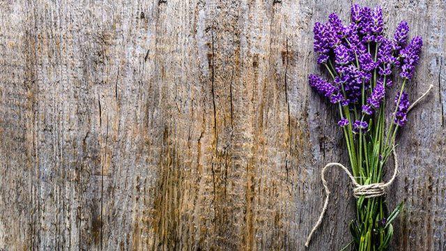 Lavanda, planta medicinal de propiedades calmantes - Flores