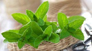 10 plantas medicinales imprescindibles en tu hogar - Menta