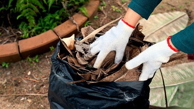 Recoger hojas del suelo