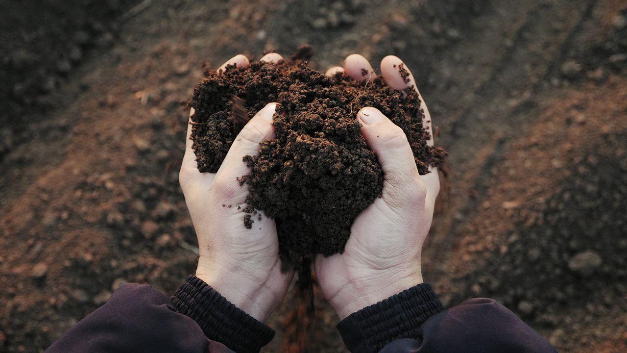 ¿Se puede recuperar la tierra de una jardinera podrida por exceso de agua?