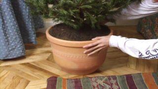 Colocar el árbol iluminado en un lugar iluminado