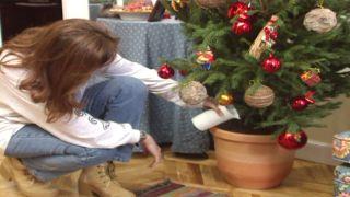 Regar árbol de navidad