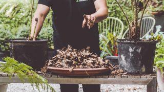 Mezcla de hojarasca y compost