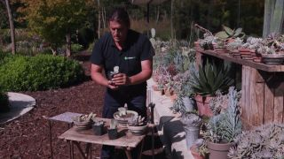 Multiplicar plantas crasas por esquejes de hoja