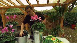 Cómo proteger a las plantas del frío