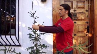 Decorar la entrada de la casa con plantas en Navidad