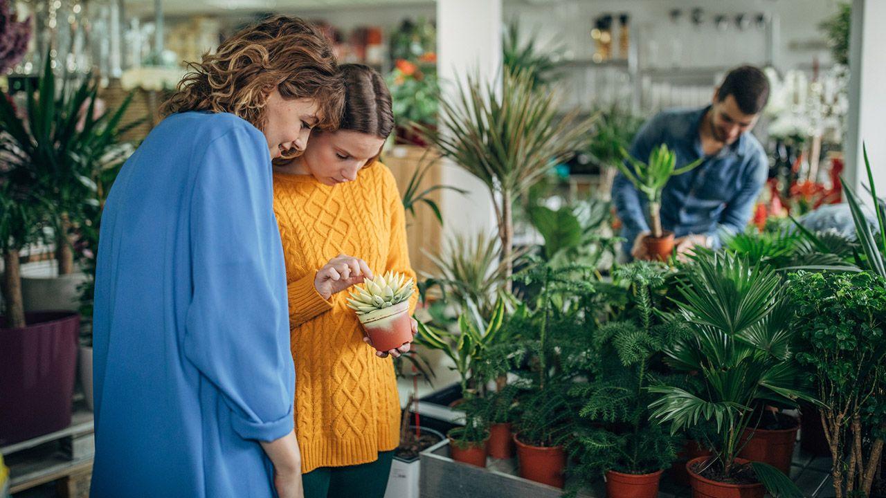 Comprar plantas de interior en la tienda